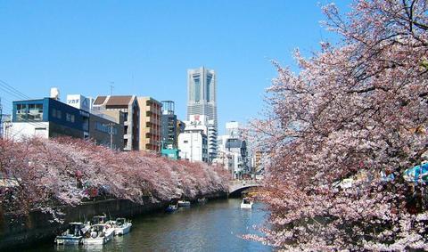 ランドマークタワーと桜並木.jpg